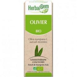 Herbalgem olivier Bourgeons Bio 15 ml
